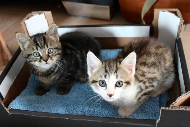chatons dans une caisse