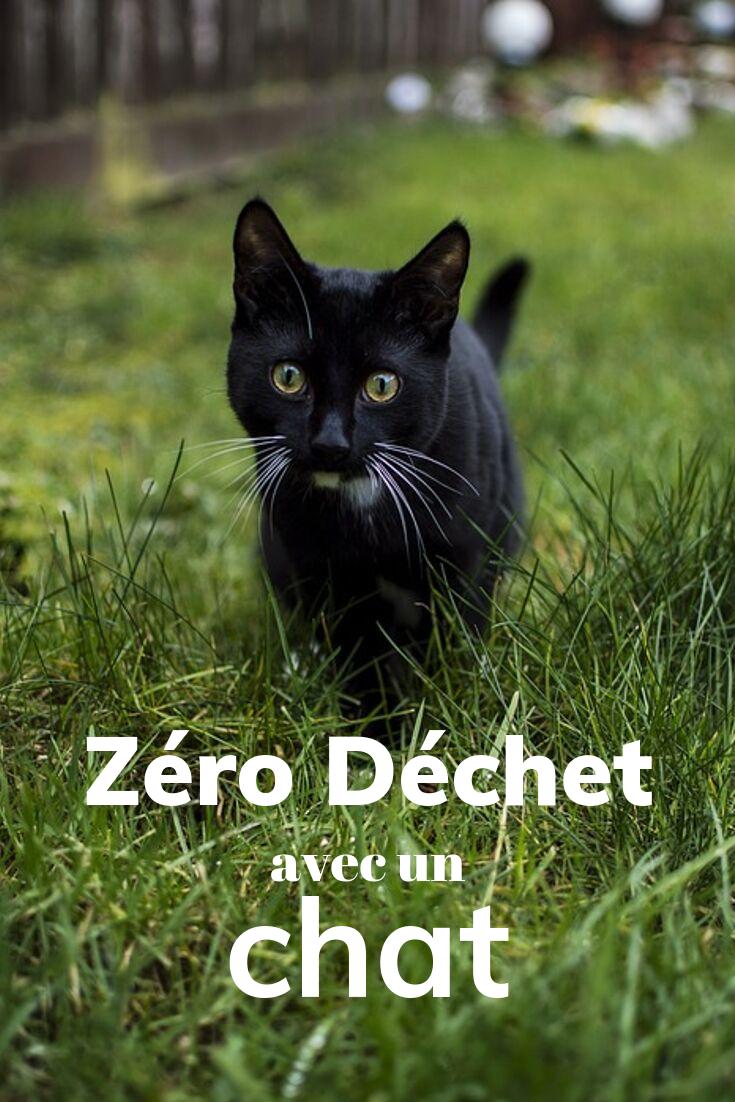 zéro déchet avec un chat