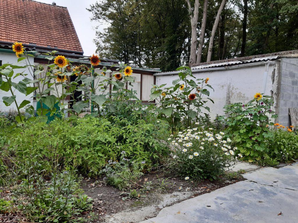 Jardin potager bio naturel